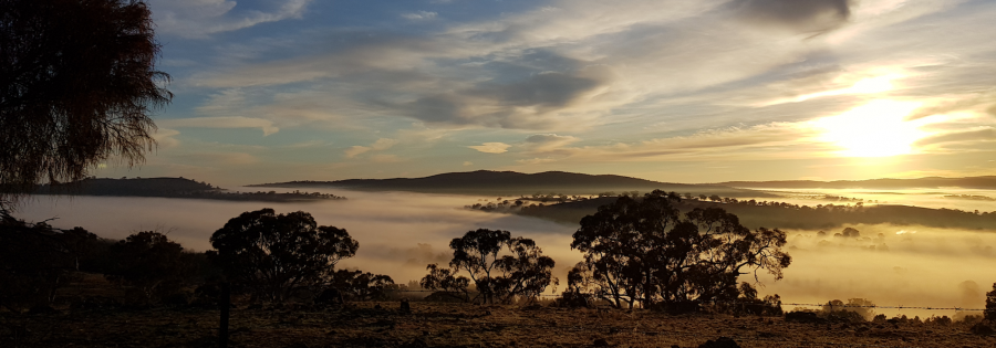 Rural landscape with Eucalypts, fog and sun low on horizon