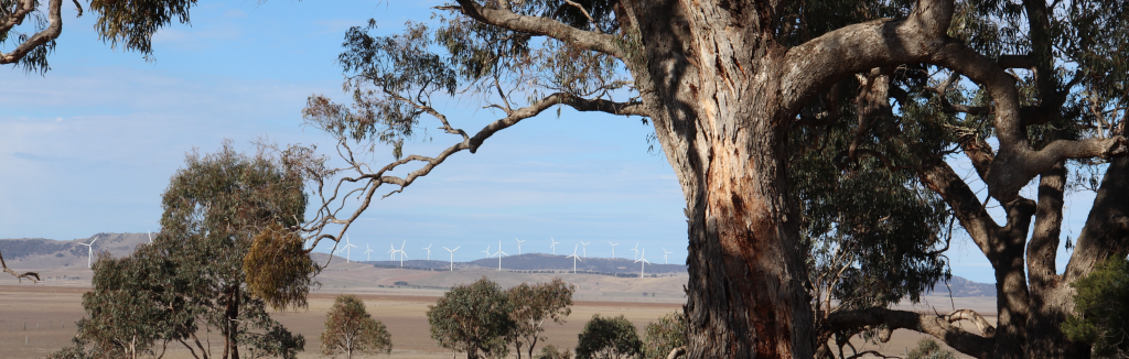 Silver Wattle retreat centre Eucalypts with backdrop of wind farm across Lake George